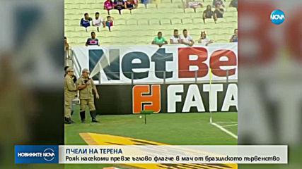 Пчели забавиха началото на футболен мач от бразилското първенство