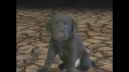 A Puppy In Halo 3