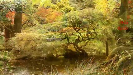 Шансон Красивые Песни Осень!