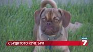 Сърдитото куче Ърл омагьоса Facebook