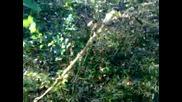 Vahsi Kediyle Karsilasmak Ormanda 2014 Hd