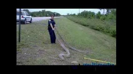 Най - Големите Змии В Целия Свят