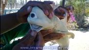 Рибар улови акула-циклоп (удивително)!!!