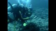 Находка от морски разновидности