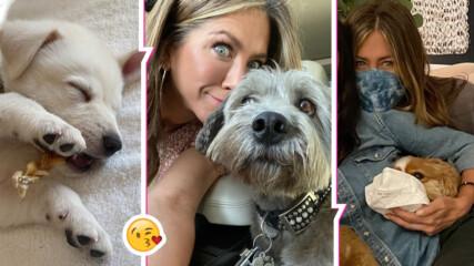 Нов член на семейството на Дженифър Анистън - малкият Лорд Честърфийлд, едно куче с кауза