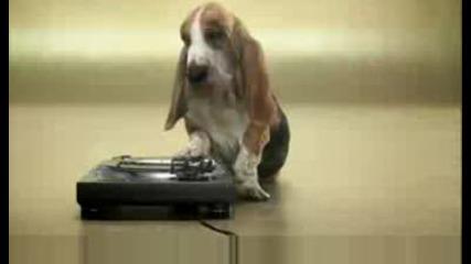 Кучешки Beatbox