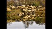 Когато бях овчарче