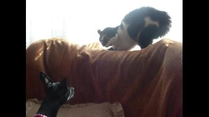 Стейси и Маца