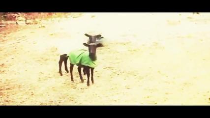 Wiz Khalifa ft. Овцата - Black And Yellow