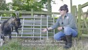 Around the world: The home farm for special needs animals