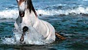 Vicente Fernandez - Corrido del caballo blanco
