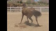 Смях !!! Конят който не спира да пърди