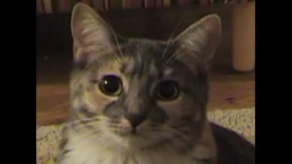 Dramatic Kitty