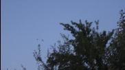 Тренировка на Млади Гълъби над Гълъбарника