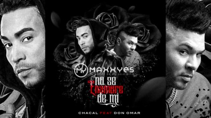 2017* Chacal feat Don Omar - No te enamores de mi