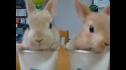 Сладки зайчета-байчета