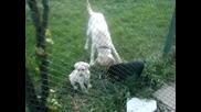 Tara, Edi & Pupps