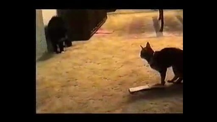 Говореща котка