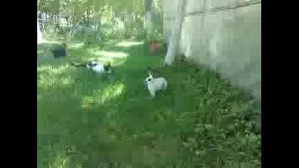 коте на лов за зайци