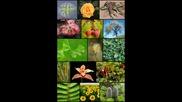 Роля На Организмите В Природата И Значението Им За Човека