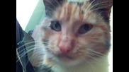 Котки :D
