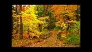 Richard Clayderman - Love Story Mi Chiquitita Bebe