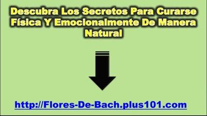 Como Tomar Flores De Bach