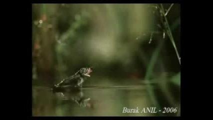 Летящата Жаба
