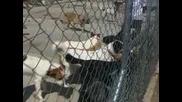 Кметът Фъндъкова посети приют за бездомни кучета