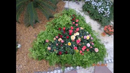 флора Бургас 2013 част 1