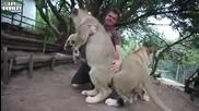 Игра с бебе лъвче!