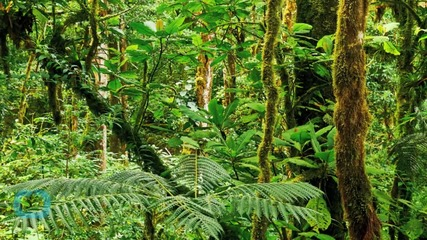 Ex-WWF Chief Warns Government to Save Rainforests