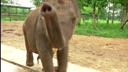 Sri Lanka Elephants_English VO