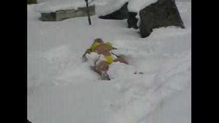 По Бански В Снега