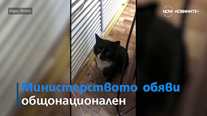 Котка и нейният спасител се превърнаха в местна знаменитост в Русия