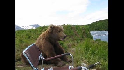 Мъж получава изненада от любопитна кафява мечка.
