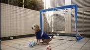 Куче вратар подлуди футболните фенове в социалните мрежи.