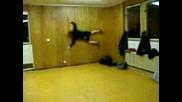 Смешен идиот се хвърля срещу стената