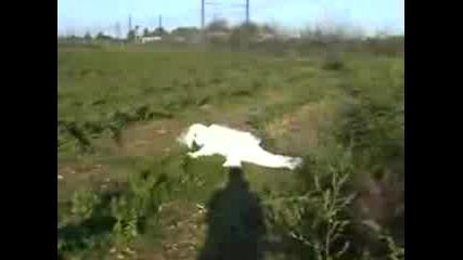 Remi Gaillard - The Rabbit !!!