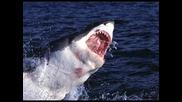 Чудовищната акула Мегалодон