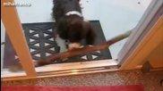 Кучета с прекалено големи пръчки- компилация