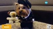 Кучета в смешни костюми