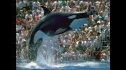 Снимки На Делфини, Косатки И Риби