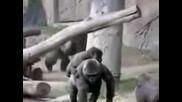 Нещо Смешно: Луди Маймуни