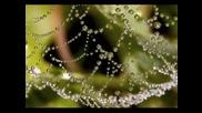 Kitaro - Tender Dew Drops