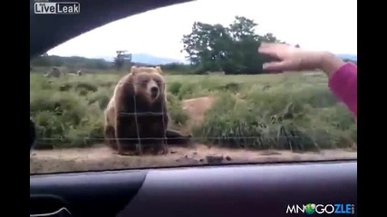 Вежлива мечка , маха на туристи :)