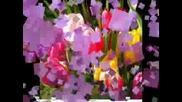 Честит 8ми Март На Всички Дами