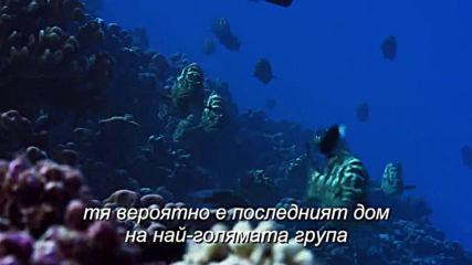 Blue Planet Ii / Синята Планета Ii (2017) Кораловите рифове / Част трета / Bg subs (вградени)