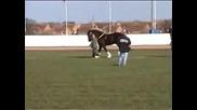 Big Horses - Shire