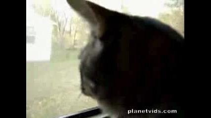 Котка Издава Странни Звуци